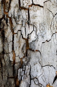 Texture of a tree trunk close-up