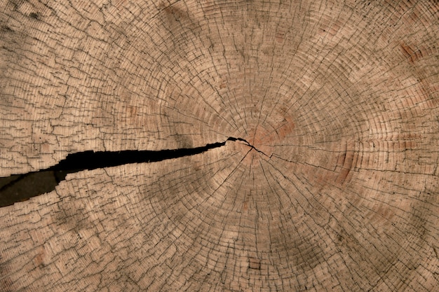 Texture of the tree trunk with cracks