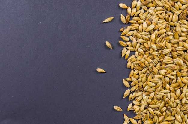 Texture with of barley malt for beer, pale ale, pilsen.