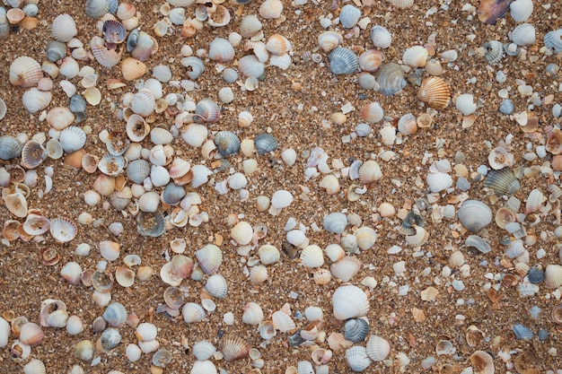 Texture with sea shells and sand