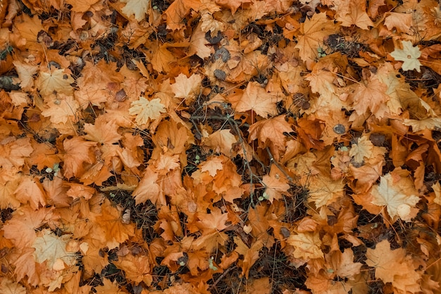 Texture, yellow leaves on the ground, top view.  cold, yellow leaves, autumn mood. copy space.