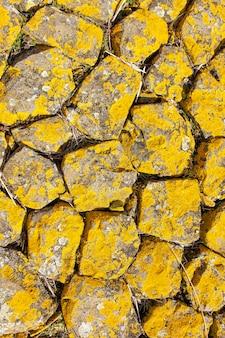 テクスチャの黄色い岩の背景