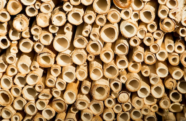 Textured abstract natural background of wooden or wood cut bamboo sticks or pipes with round tubes