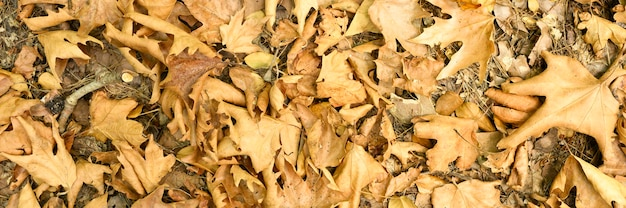 Textured background of heap dry withered fallen autumn leaves of trees.