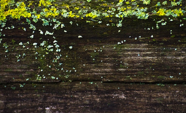 Textured background of old wood with green moss
