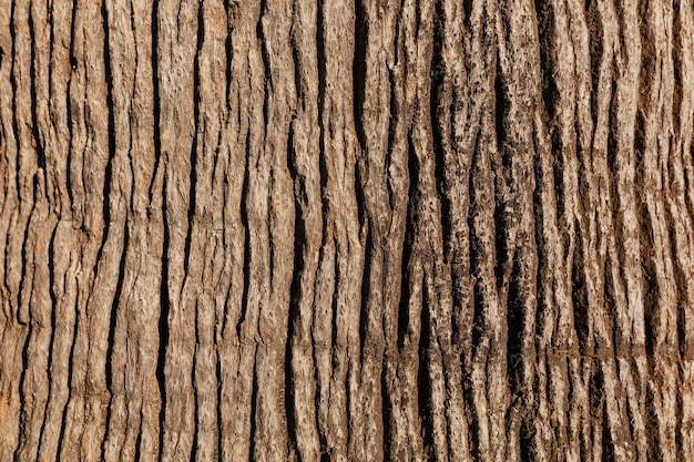Textured bark of a noble tree