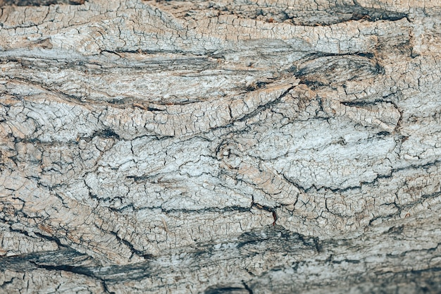 Textured grey tree bark background. wooden background