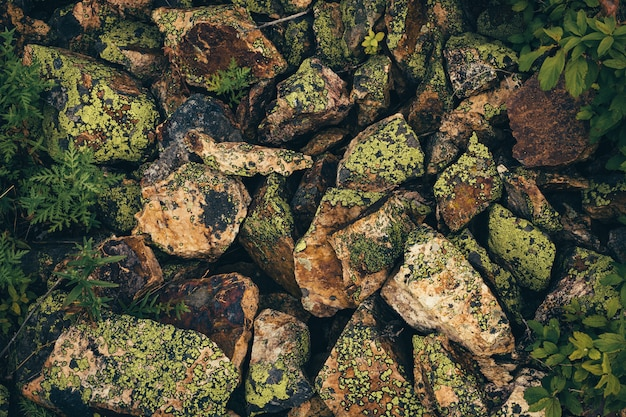 Textured stones covered with mosses and lichens are scattered chaotically. view from above.