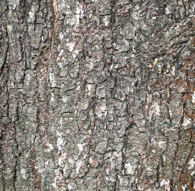Textured tree bark nature for background