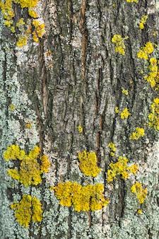 地衣類のコロニーが付いている織り目加工の木の表面
