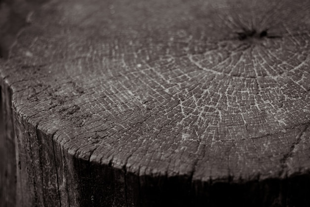 Textured wooden tree stump with cracks and rings