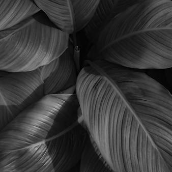 熱帯の葉の背景の黒と白の画像の自然な抽象的な黒い葉のテクスチャ