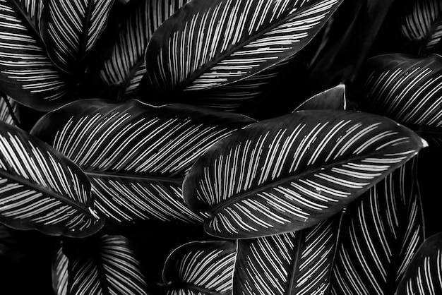 열대 잎 배경 흑백 이미지를 위한 자연 추상 검은색 잎의 질감