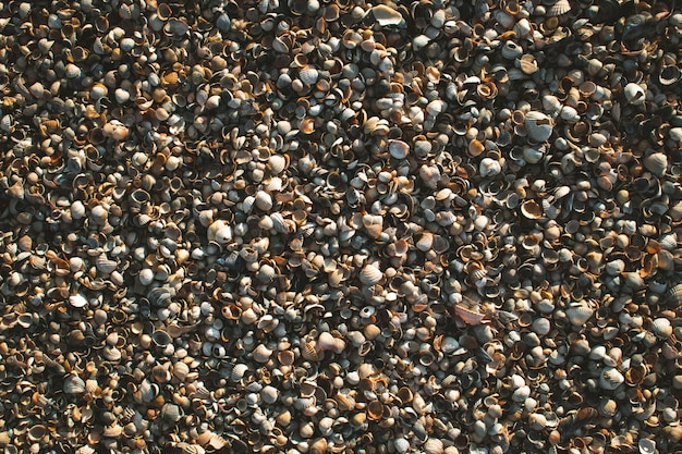 Textures of shells and sand on the sea shore