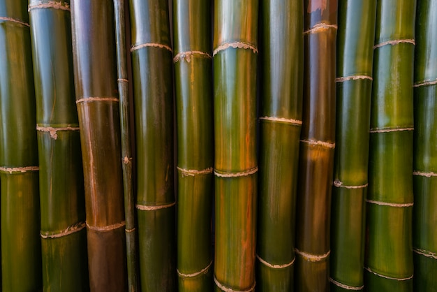 Textures surface pattern design colorful of bamboo wall this is a large bamboo.