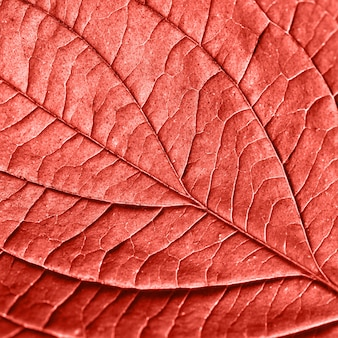 リビングコーラルの年の色でレイアウトするための柔らかく自然な葉のパターンの背景。ファッショナブルな流行色。マクロ写真。フラットレイ