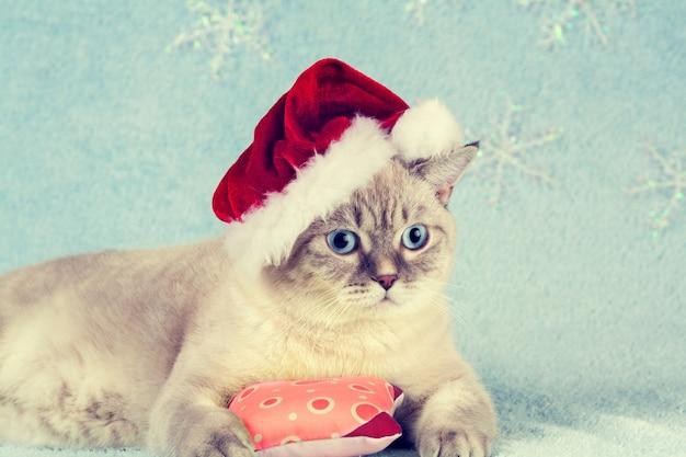 Thai breed kitten wearing a santa hat