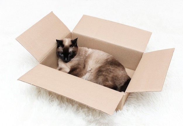 A thai cat with blue eyes is in a box.