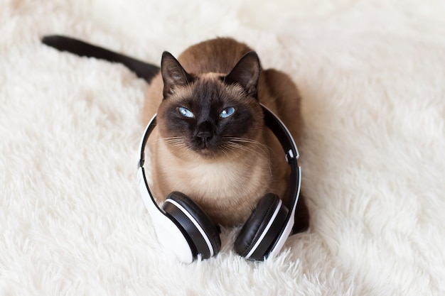 Thai cat with blue eyes wearing headphones on a white.