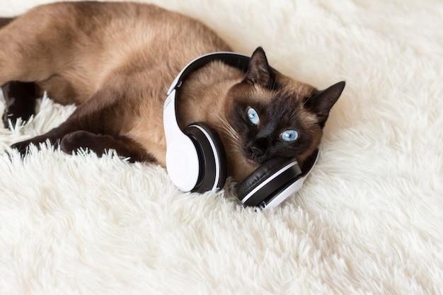 白のヘッドフォンでタイの猫。