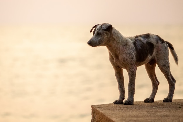 Thai dogs are walking along the beach.