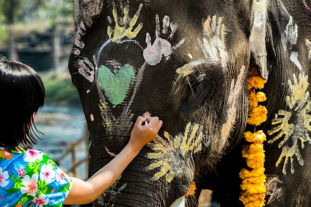 Thai elephants welcome songkran festival elephant face painting