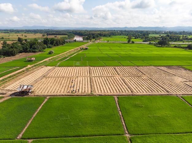 小さな植物や作物のプランテーションで働くタイの農家