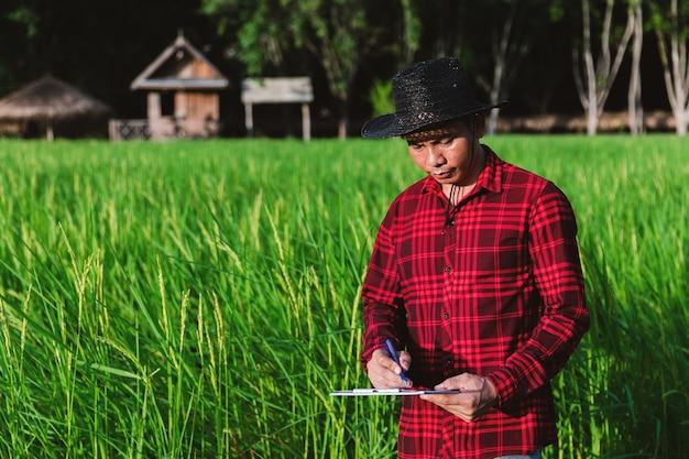 Thai farmers inspecting rice fields in the fields
