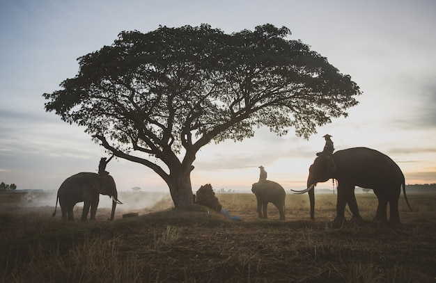 田んぼで働くタイの農民