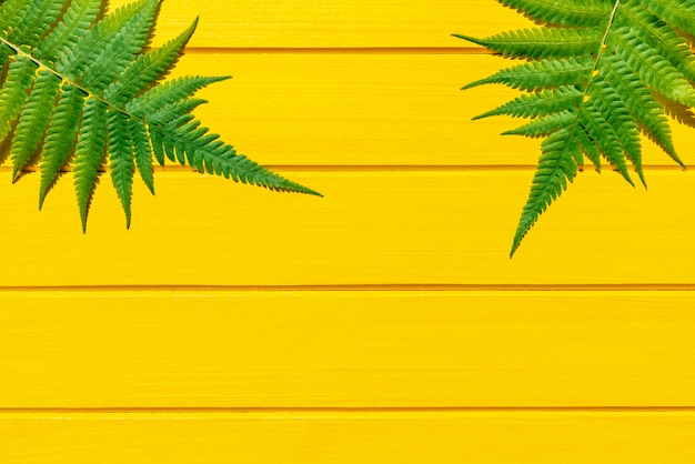 Thai fern tropical plant green color on yellow wood texture