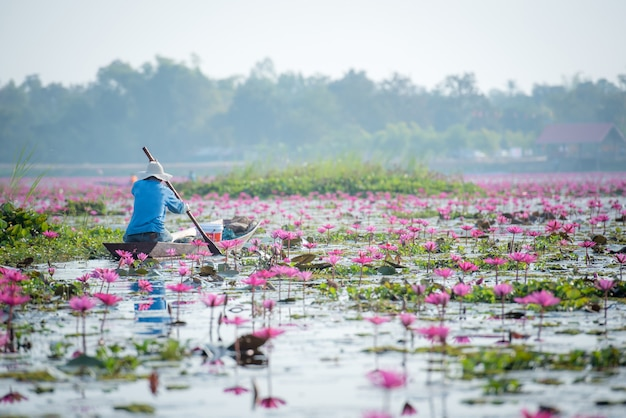 Thai fishermen on thai lotus lake in freshwater lake, nong khai province
