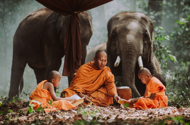 Thai monks studying in the jungle with elephants