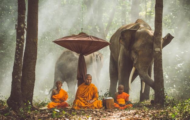 Тайские монахи гуляют в джунглях со слонами