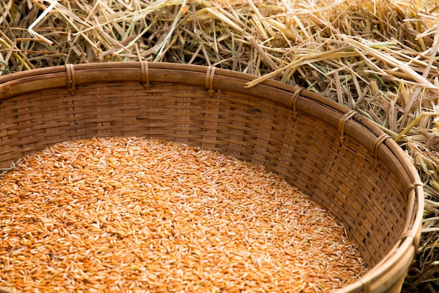 Thai organic red jasmine rice in weave basket on dry straw background