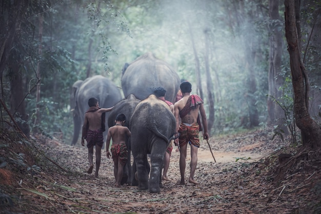 Thai people is mahout elephant for control elephant and for tourism with elephants