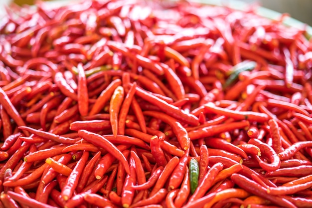 Thai red chili pepper. the chili peppers are widely used in cuisines to add spiciness.
