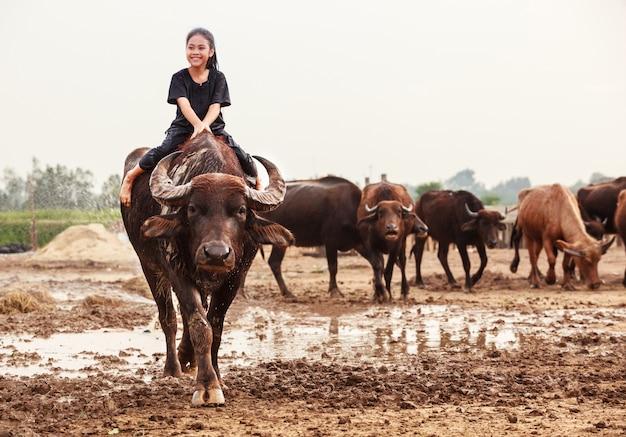 水牛の群れに乗っていて、手をつけているタイの羊飼いの女の子 Premium写真