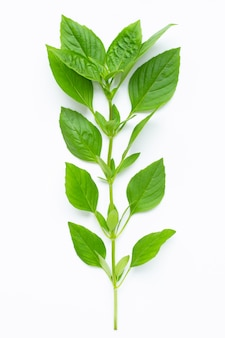 Thai sweet basil leaves