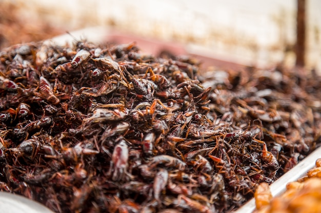 Thai traditional street food grasshoppers,larvae ,market counter ,the concept of the traditional exotic food