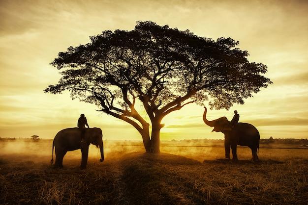Сельская местность таиланда; силуэт слона на фоне заката