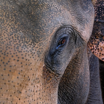 Thailand elephant face portrait drama in the background