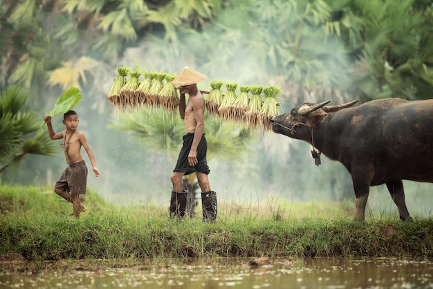 Thailand farmer worker