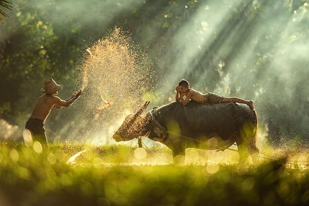 Thailand farmers rice planting and  grow rice in the rainy season