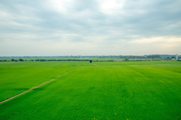 Thailand green field