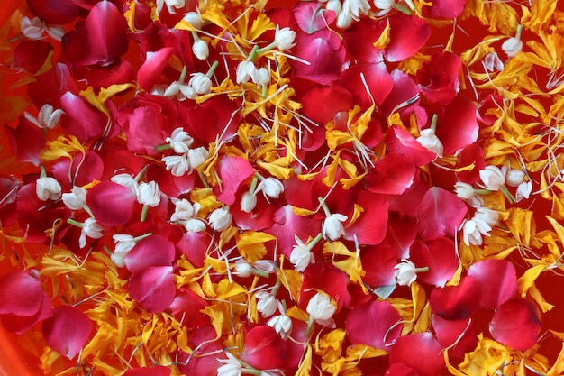 Thailand songkarn festival colorful with rose jasmine and marigold petal in the water
