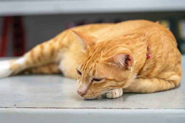 タイのショップで冷蔵庫にかかっている生thailandオレンジ若いショートヘア猫