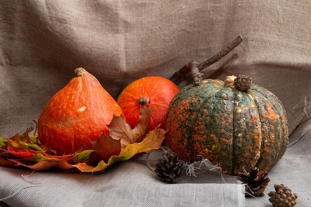 Thanksgiving background, pumkins, auturm leaves and cones on a flax