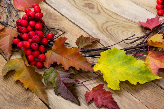 Thanksgiving background with leaves and ripe berries, close up
