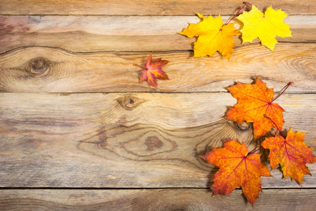 Thanksgiving  with vivid fall maple leaves, copy