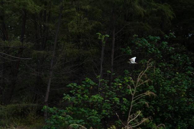 That water bird flying in forest